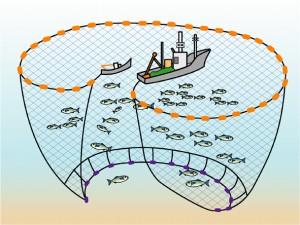 旋網漁業 一般に巾着網とも言われるこの漁法は、これまで四張網という規模の小さい漁... 漁業につ
